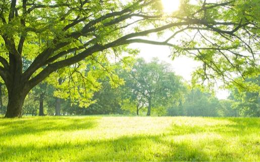 """新羽金属は""""緑多き地球""""を次世代につなげます"""